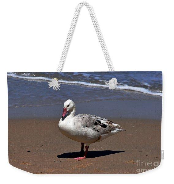 Pretty Duck Posing On Monterey Beach Weekender Tote Bag