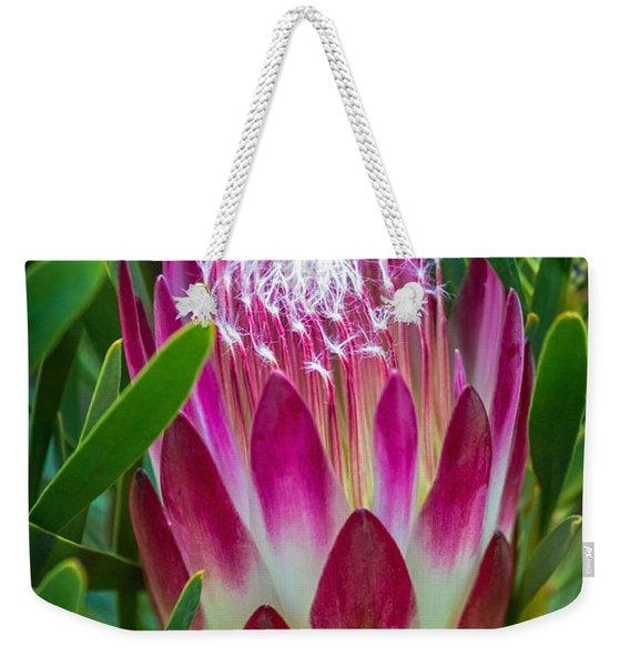 Protea In Pink Weekender Tote Bag