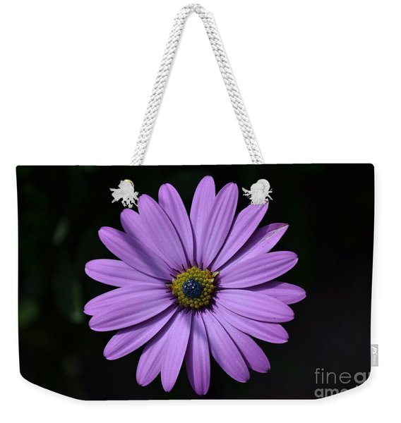 Weekender Tote Bag featuring the photograph Purple African Daisy by Scott Lyons