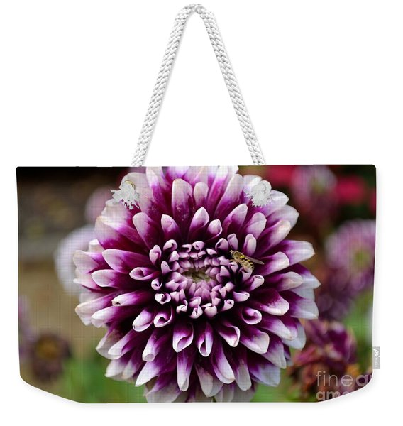 Weekender Tote Bag featuring the photograph Purple Dahlia White Tips by Scott Lyons