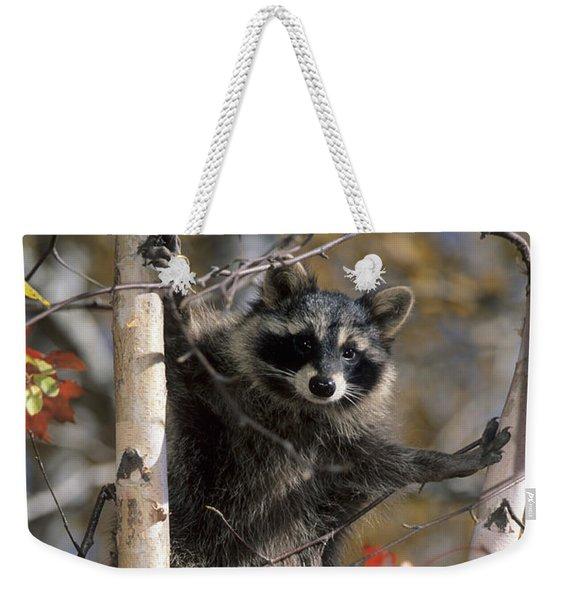 Racoon In Tree Weekender Tote Bag