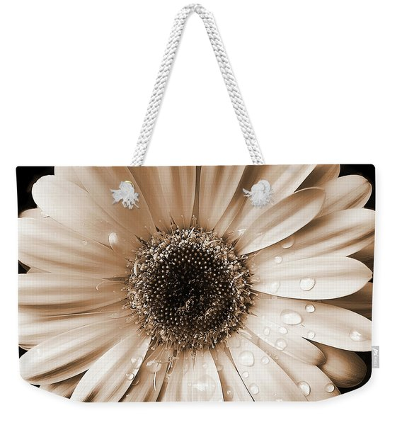 Raindrops On Gerber Daisy Sepia Weekender Tote Bag