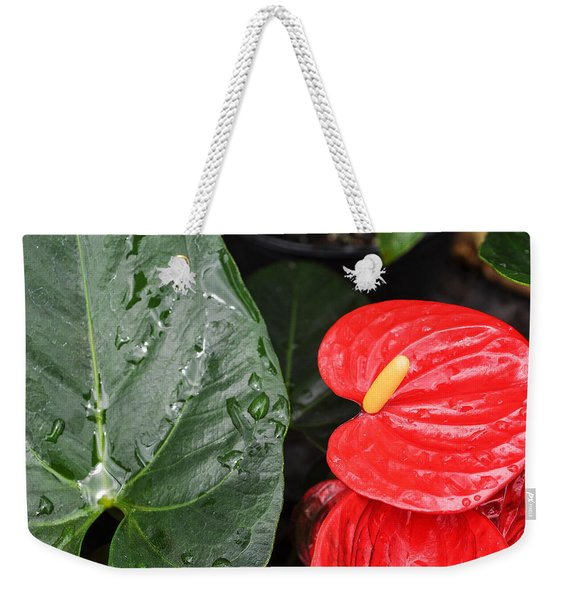 Red Anthurium Flower Weekender Tote Bag