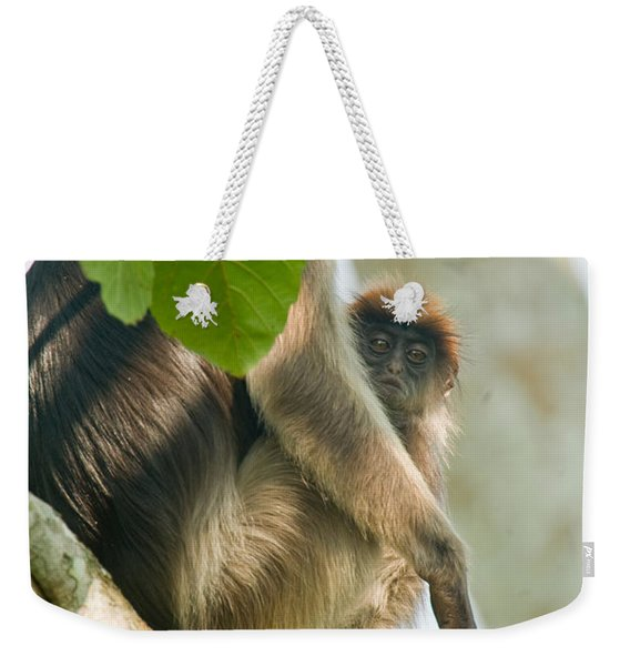 Red Colobus Monkey With Its Young One Weekender Tote Bag