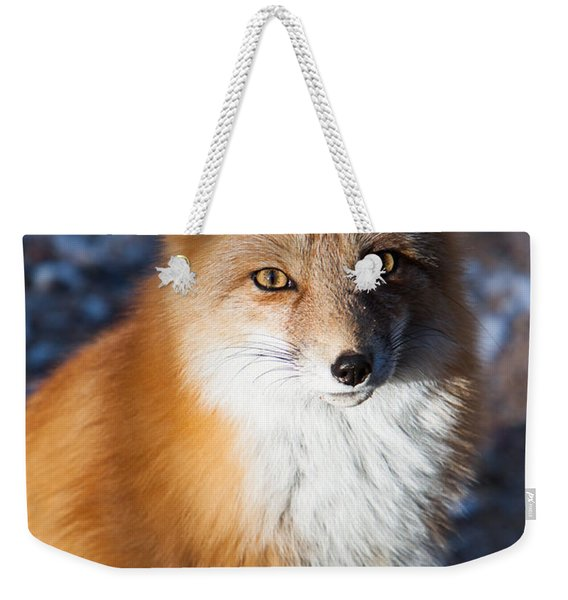 Weekender Tote Bag featuring the photograph Red Fox Standing by John Wadleigh