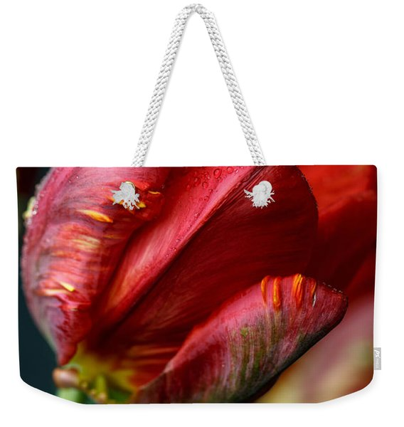 Red Tulip With Dew Weekender Tote Bag