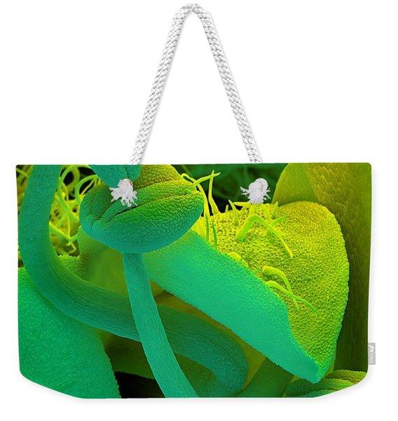 Rosemary Sem Weekender Tote Bag