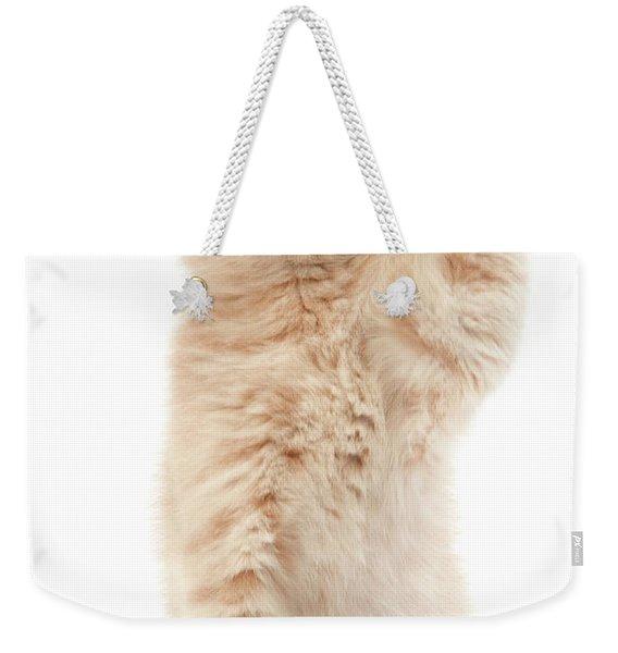 Scottish Fold Creme Weekender Tote Bag