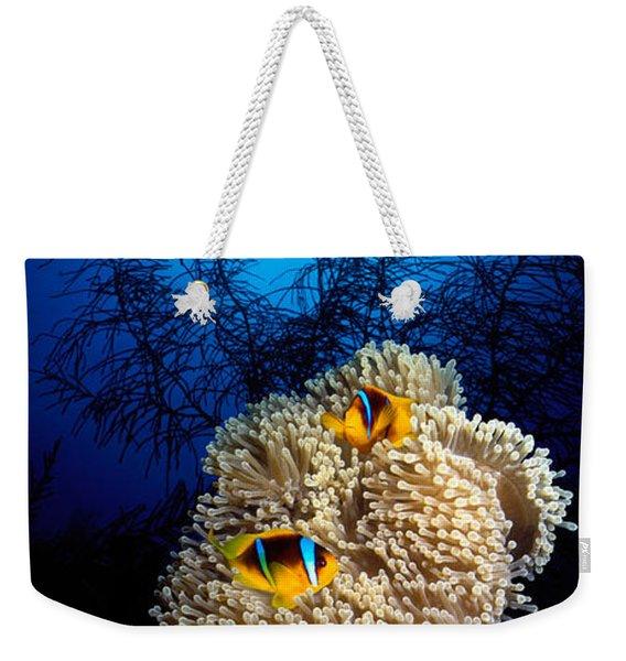 Sea Anemone And Allards Anemonefish Weekender Tote Bag