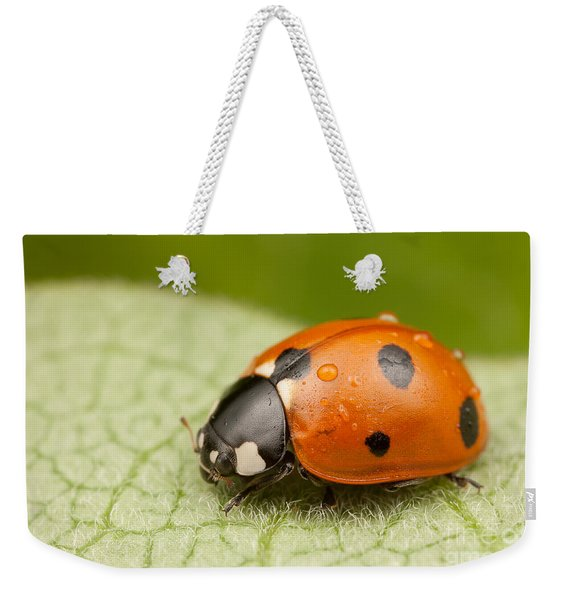 Seven-spotted Lady Beetle II Weekender Tote Bag
