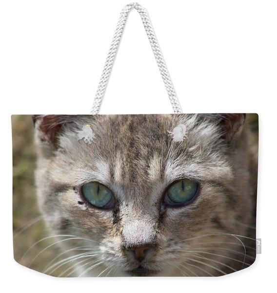 Silver Tabby But What Color Eyes Weekender Tote Bag
