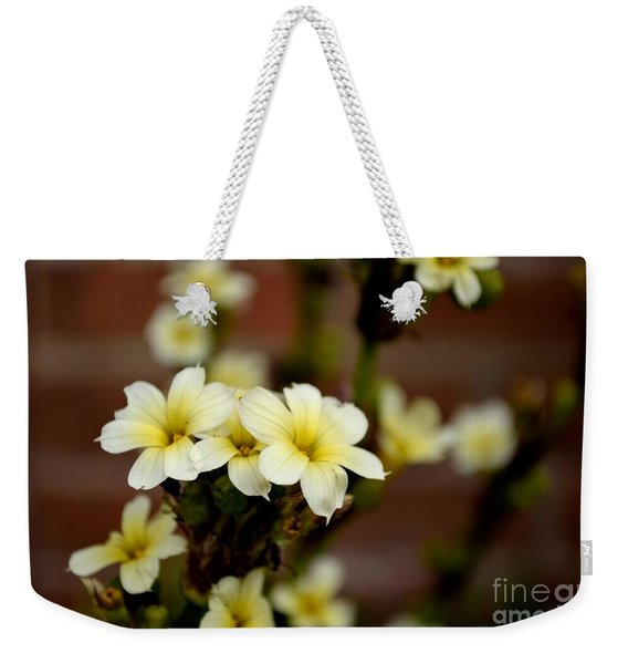 Weekender Tote Bag featuring the photograph Sisyrinchium Striatum by Scott Lyons