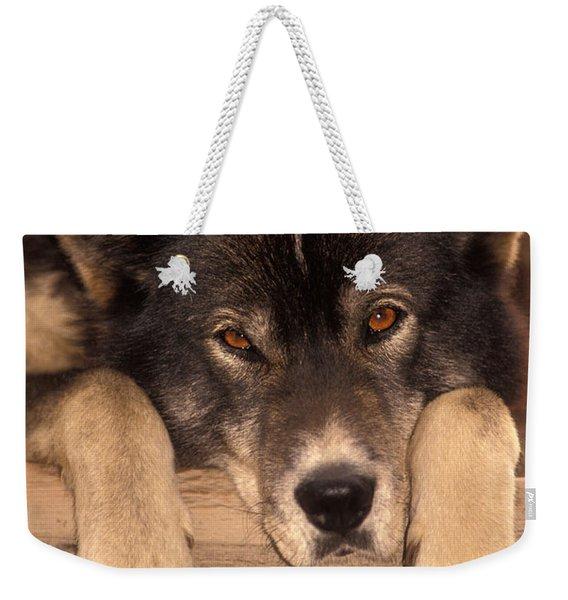 Sled Dog Weekender Tote Bag
