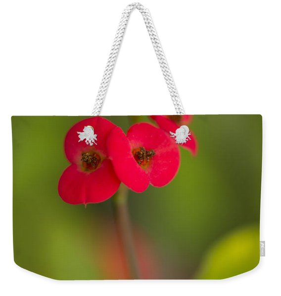 Weekender Tote Bag featuring the photograph Small Red Flowers With Blurry Background by Jaroslaw Blaminsky