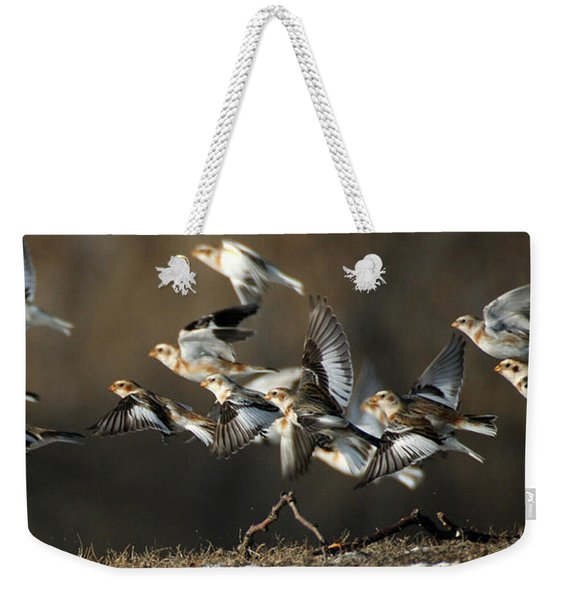 Weekender Tote Bag featuring the photograph Snow Buntings Taking Flight by William Selander