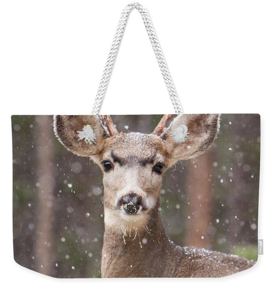 Weekender Tote Bag featuring the photograph Snow Deer 1 by John Wadleigh