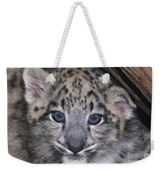 Snow Leopard Cub Endangered Weekender Tote Bag