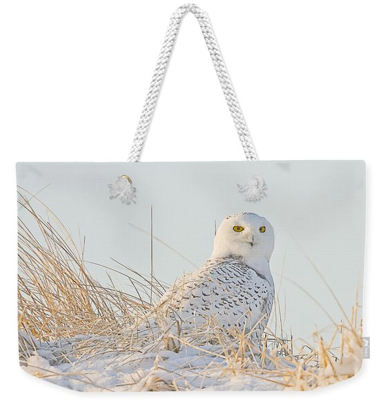 Snowy Owl In The Snow Covered Dunes Weekender Tote Bag