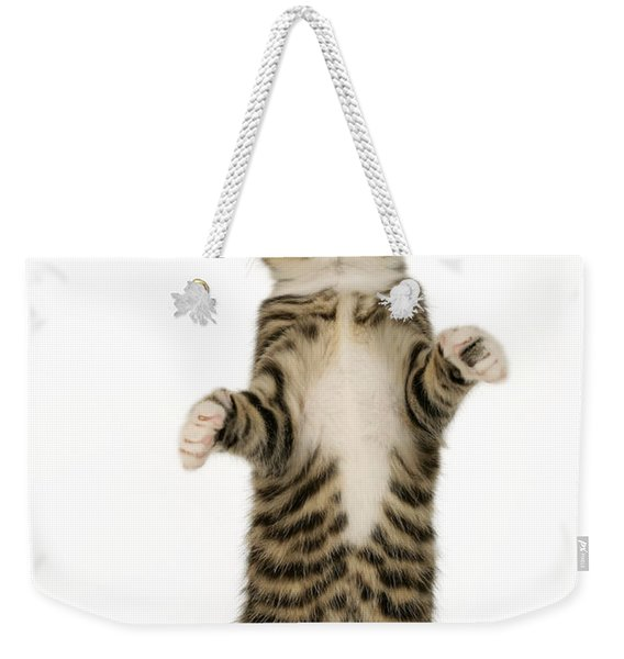 Standing Cat Ck305 Weekender Tote Bag