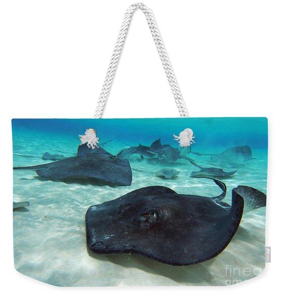 Stingrays Weekender Tote Bag