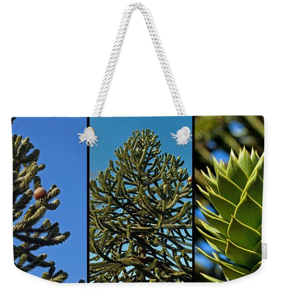 Study Of The Monkey Puzzle Tree Weekender Tote Bag