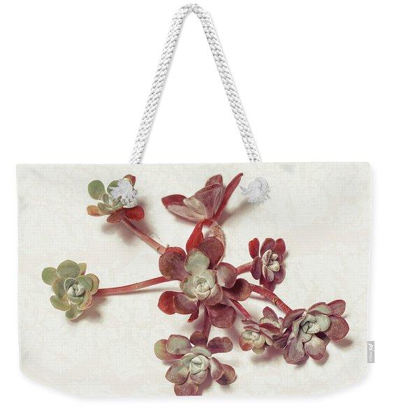 Succulent Plant 1 Weekender Tote Bag