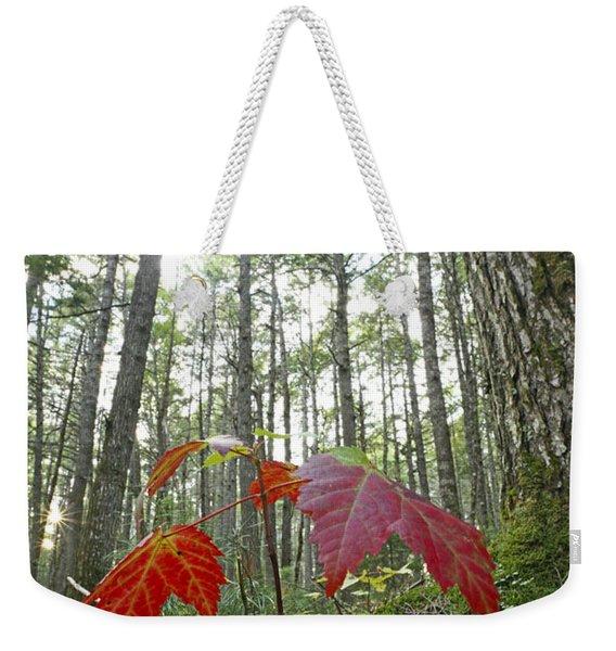 Sugar Maple In Old-growth Canadian Weekender Tote Bag