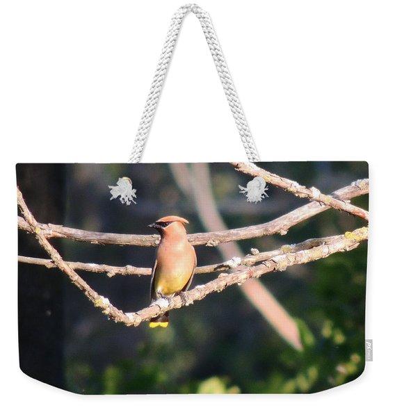 Sunbathing Cedar Waxwing  Weekender Tote Bag