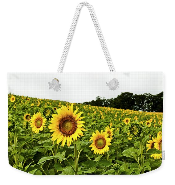 Sunflowers On A Hill Weekender Tote Bag