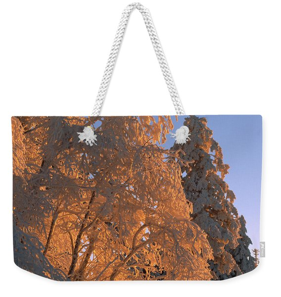 Sunlight On Spruce Trees Covered Weekender Tote Bag