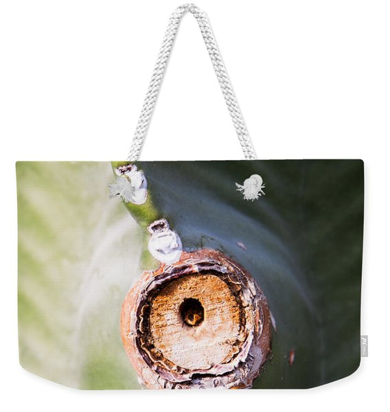 Weekender Tote Bag featuring the photograph Sunlight Split On Cactus Knot by John Wadleigh