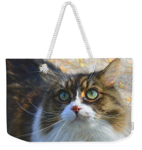 The Cat II Weekender Tote Bag