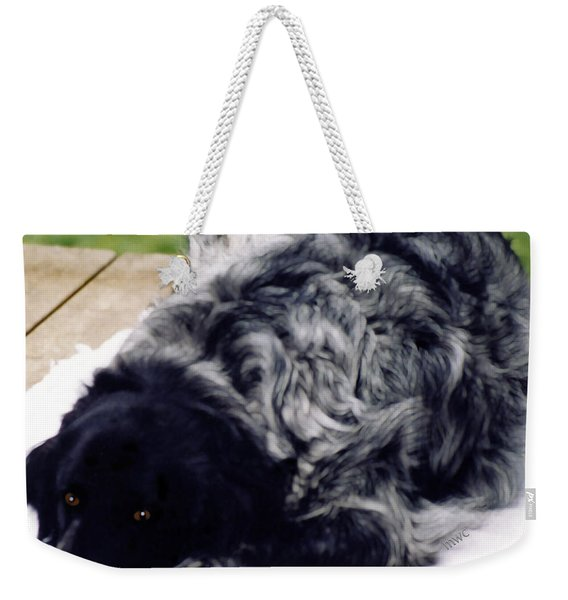 Weekender Tote Bag featuring the photograph The Shaggy Dog Named Shaddy by Marian Cates