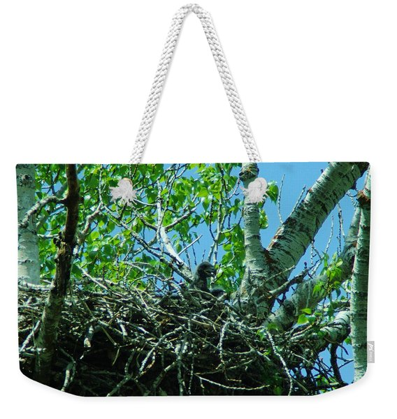 The Young Eaglet Peaks Out  Weekender Tote Bag