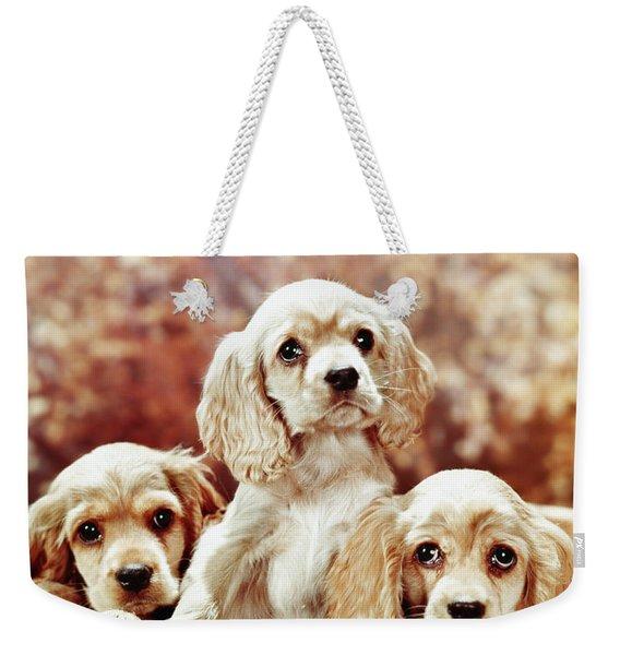 Three Blond Cocker Spaniel Puppies Weekender Tote Bag