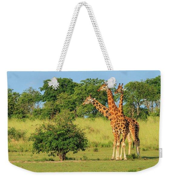 Three Giraffes Stand In A Line Weekender Tote Bag