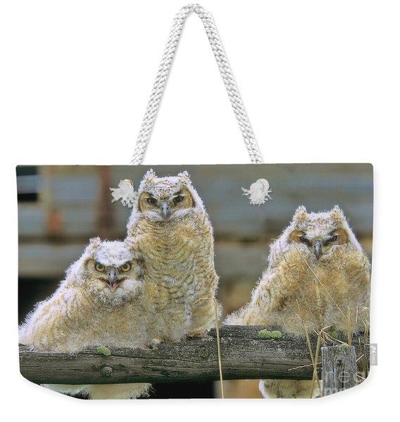 Three Great-horned Owl Chicks Weekender Tote Bag