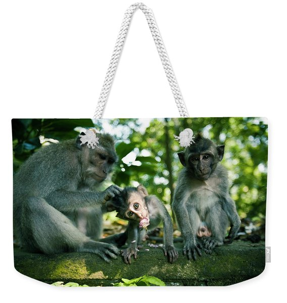 Three Monkeys Sitting On A Stone Wall Weekender Tote Bag