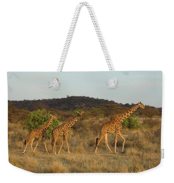 Three Reticulated Giraffes Weekender Tote Bag
