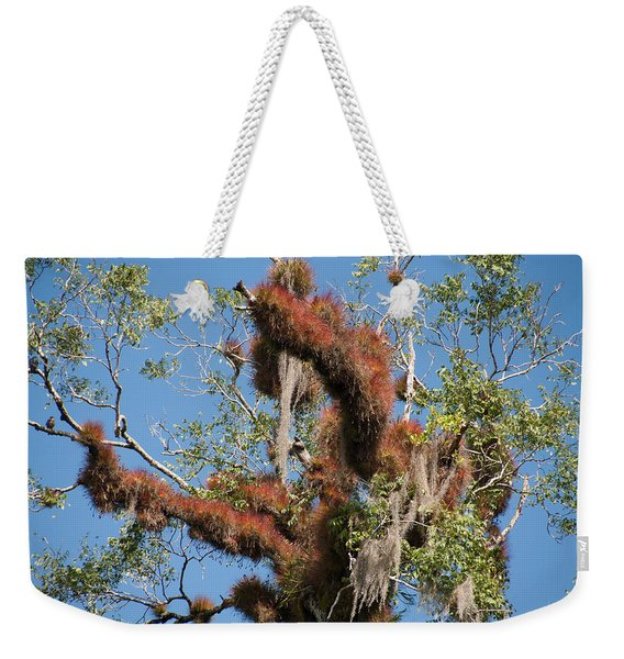 Tikal Furry Tree Closeup Weekender Tote Bag