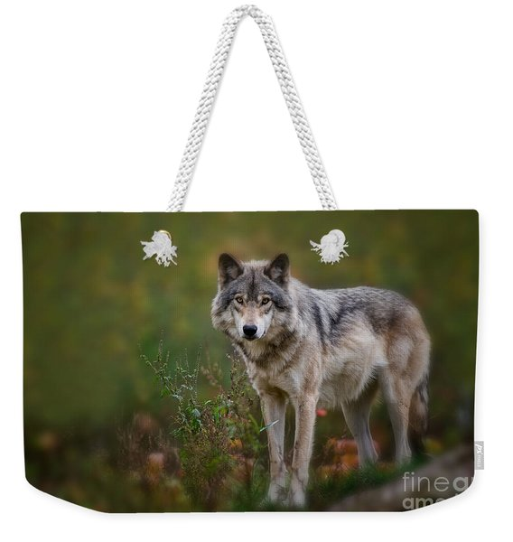 Timber Wolf Pictures 401 Weekender Tote Bag