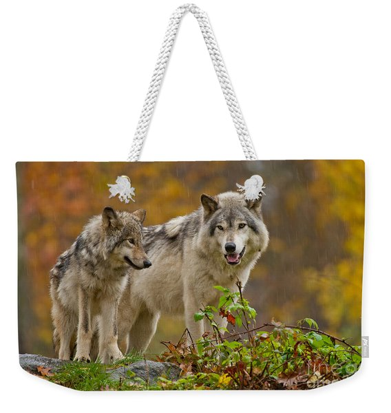 Timber Wolf Pictures 411 Weekender Tote Bag