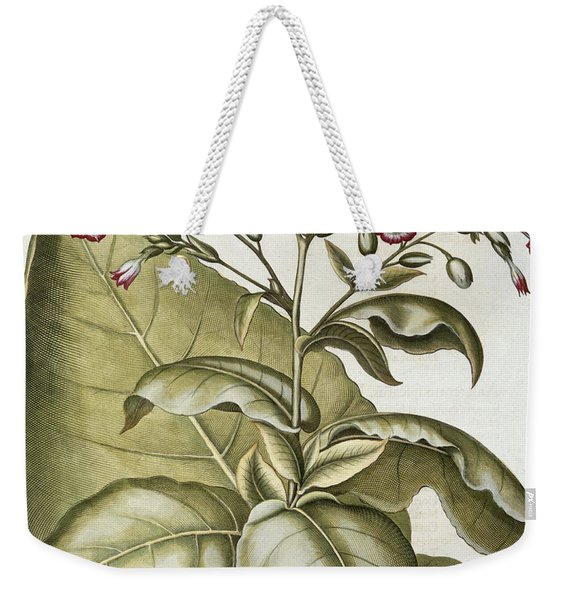 Tobacco Plant, From The Hortus Weekender Tote Bag