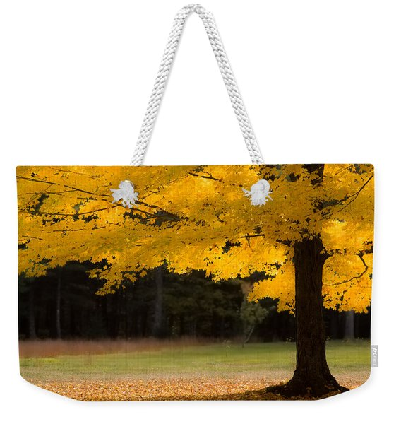 Weekender Tote Bag featuring the photograph Tree Canopy Glowing In The Morning Sun by Jeff Folger