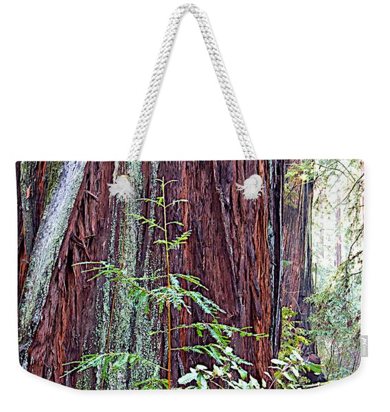 Trunk Of Coastal Redwood In Armstrong Redwoods State Preserve Near Guerneville-ca Weekender Tote Bag