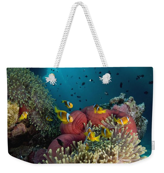 Two-banded Anemonefish And Bulb Weekender Tote Bag