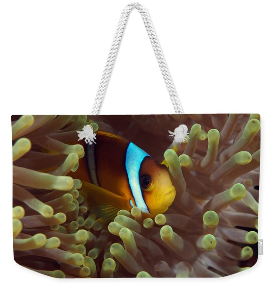 Two-banded Anemonefish Red Sea Egypt Weekender Tote Bag