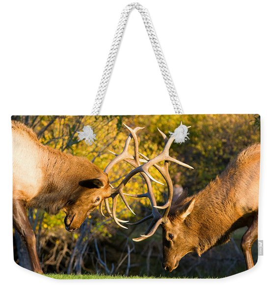 Two Elk Bulls Sparring Weekender Tote Bag