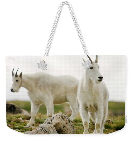 Two Mountain Goats Near The Summit Weekender Tote Bag