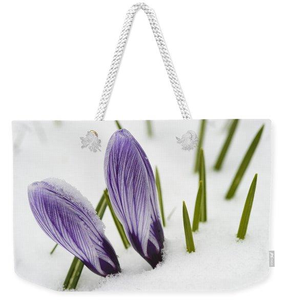 Two Purple Crocuses In Spring With Snow Weekender Tote Bag